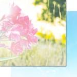 Verano Azul - Pureness